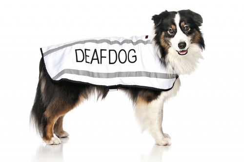 Deaf Dog Coats