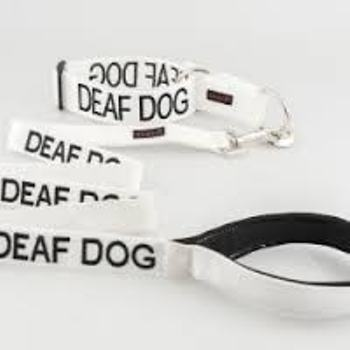 Deaf Dog Lead
