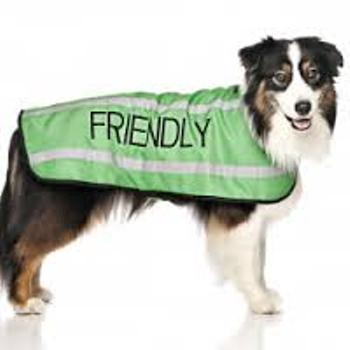 Friendly Dog Coat