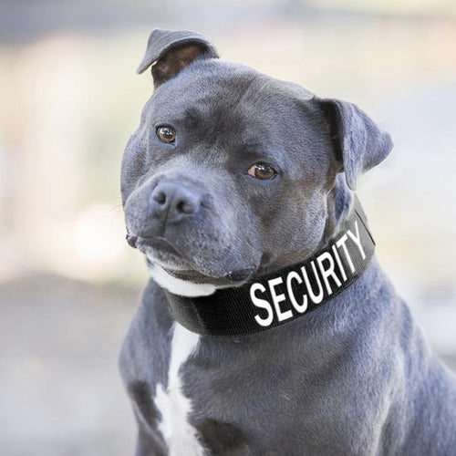 Security Collar