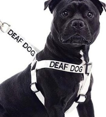 Deaf Dog XL Harness