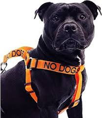 No Dogs XL Harness