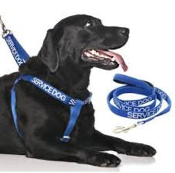 Service Dog XL Harness