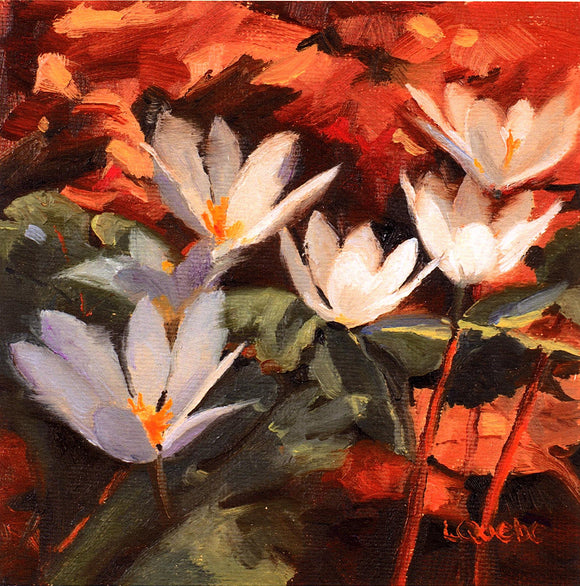 Bloodroot Reproduction by Liz Quebe