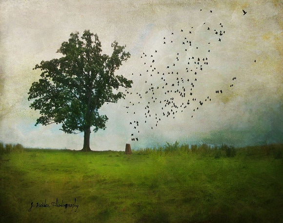 More Than You Know by Jamie Heiden