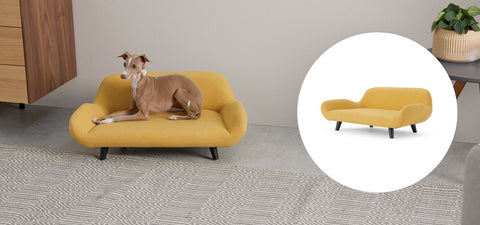 Top reasons why your dog needs a modern bed in 2020.