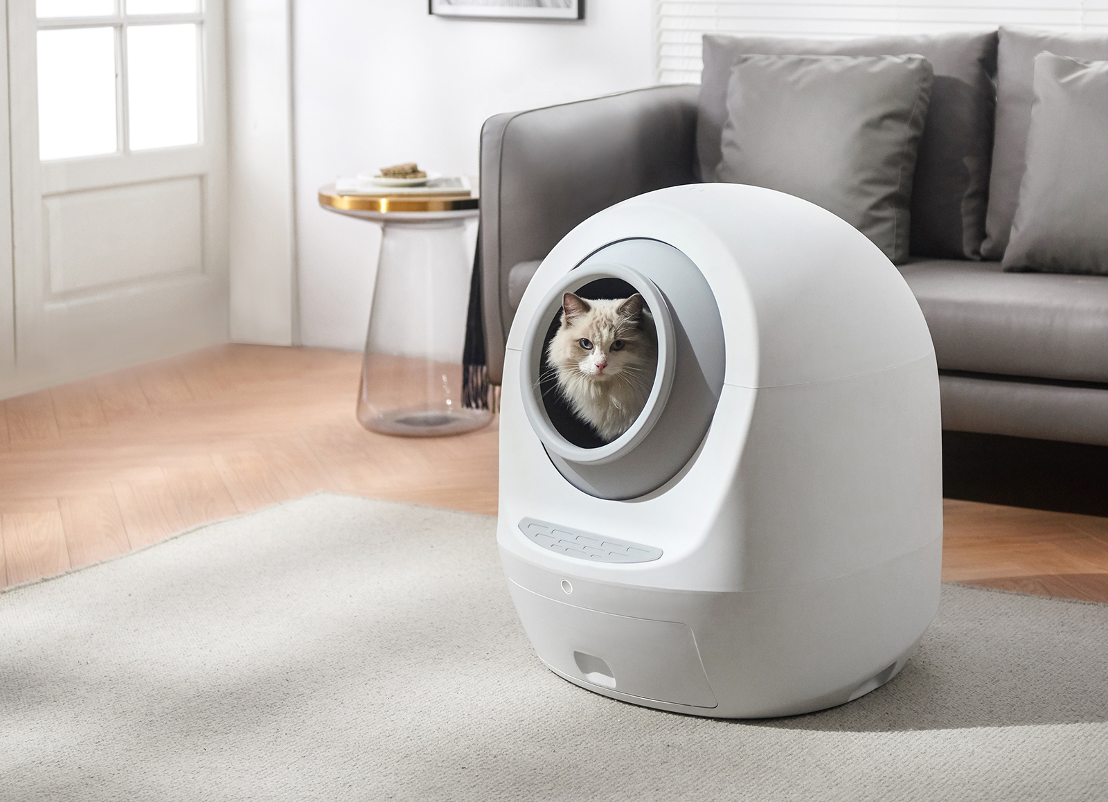 Cat inside the Litter-one in the living room, color grey by hello ping. App controlled, self-cleaning litter box.