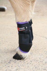 Horse Boots - Equessential Ice Boots Magnetic Horse Therapy