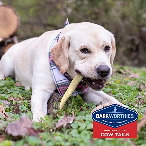 Barkworthies All-Natural Dog Treats - Flavor-Rich Cow Tail Chews (6 oz.) - High in Protein & Low in Fat