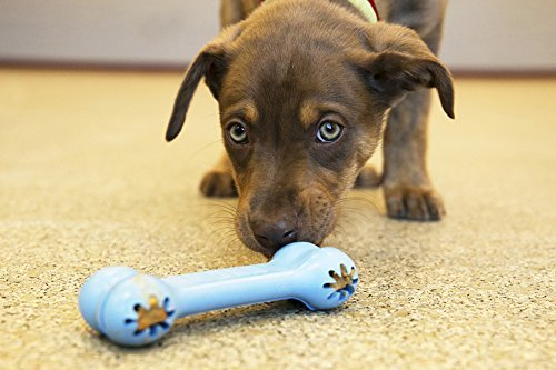 KONG Puppy Goodie Bone Dog Toy, Small, Assorted Pink/Blue (2-Pack)