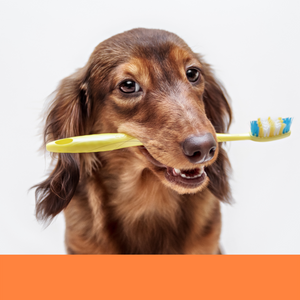 dog groomer dog grooming Boca Raton teeth brushing dog best
