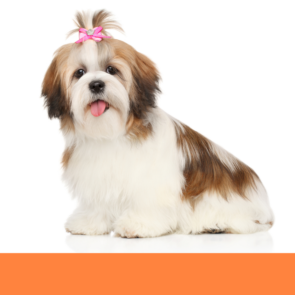 dog grooming dog groomer Boca Raton best spa salon bath full groom face trim