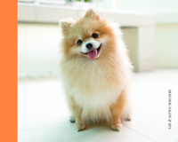 dog grooming Boca Raton best dogs bath spa