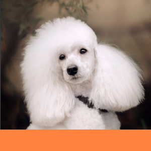 dog groomer dog grooming Boca Raton best bath face trim