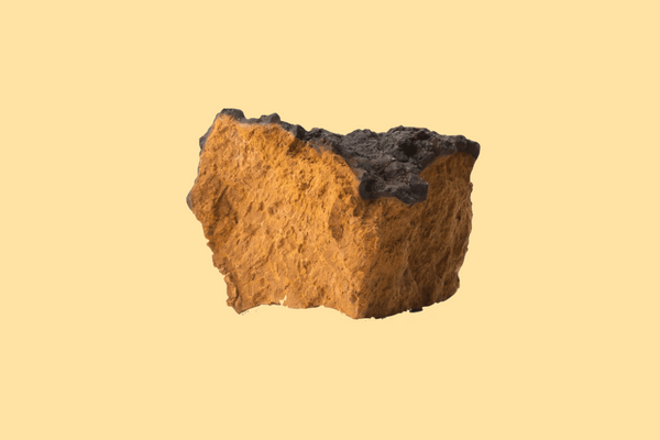 Chaga mushroom | The 6 best medicinal mushrooms, by benefit (according to science) | chaga, reishi, turkey tail, cordyceps, lion's mane, and shiitake | Zoomer's Myco Foods | super food. super coffee. super life.