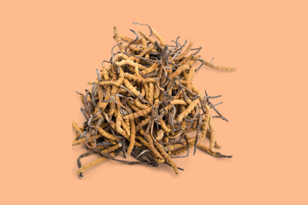 cordyceps mushroom | The 6 best medicinal mushrooms, by benefit (according to science) | chaga, reishi, turkey tail, cordyceps, lion's mane, and shiitake | Zoomer's Myco Foods | super food. super coffee. super life.