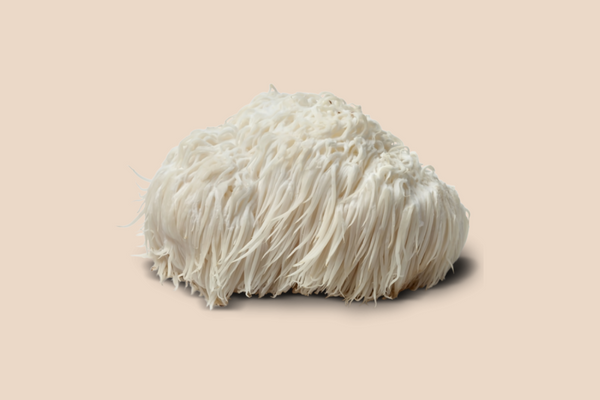 Lion's Mane Mushroom | The 6 best medicinal mushrooms, by benefit (according to science) | chaga, reishi, turkey tail, cordyceps, lion's mane, and shiitake | Zoomer's Myco Foods | super food. super coffee. super life.