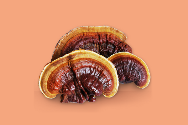 Reishi Mushroom (aka Ling Zhi) | The 6 best medicinal mushrooms, by benefit (according to science) | chaga, reishi, turkey tail, cordyceps, lion's mane, and shiitake | Zoomer's Myco Foods | super food. super coffee. super life.