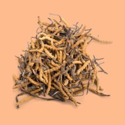 Ground Mushroom Coffee 385g - Cordyceps & Shiitake / ENDURANCE + IMMUNE SUPPORT