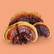Ground Mushroom Coffee 385g - Red Reishi & Turkey Tail / BOOST IMMUNITY & FOCUS