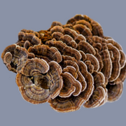Red Reishi & Turkey Tail Mushroom Elixir 70g / BOOST IMMUNITY & FOCUS / for Tea, Smoothies, Coffee & Cooking