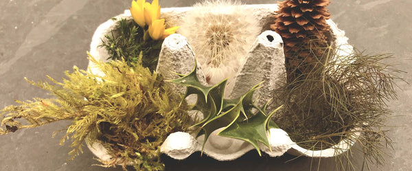 A collection of textured natural objects to play a child sensory game prickly or tickly a traditional Forest School Game