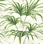 NW32504 tropical palm leaf peel and stick removable wallpaper by NextWall