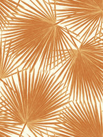 TA20206 aruba palm leaf tropical wallpaper from the Tortuga collection by Seabrook Designs