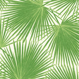 TA20204 aruba palm leaf tropical wallpaper from the Tortuga collection by Seabrook Designs