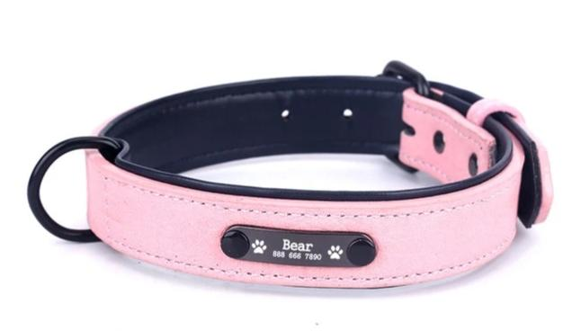 Collar with Personalized Nameplate
