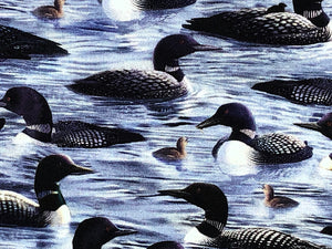 Close up of Loons Swimming in water.