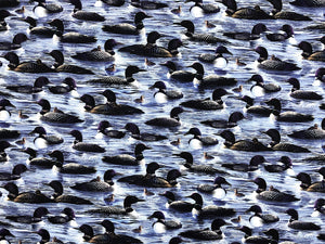 Cotton Fabric covered with Loons swimming in water.
