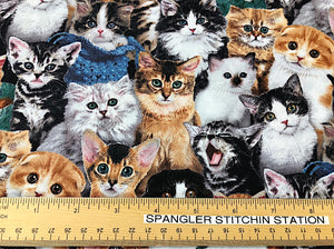 Ruler on fabric to show sizing of the cats