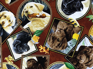 Close up of Labradors in frames on a brown background.