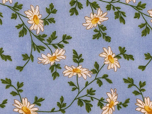 Close up of white daisies on a light blue background.