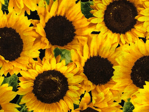 Close up of sunflowers.