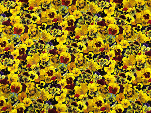 Cotton fabric covered with yellow pansies with a hint of red and purple