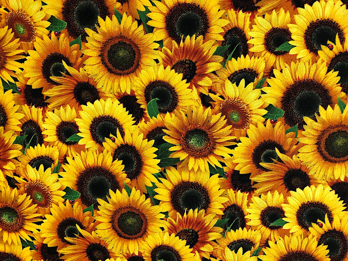 Sunflower Fabric - FL-50