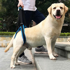 Lift Dog Harness
