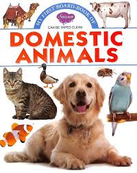 My First Board Book : Domestic Animals