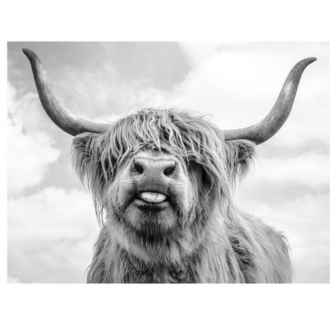 Black and White Highland Cow Canvas
