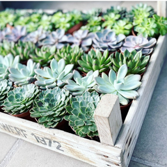 cute little indoor plants that are super cute for bedroom décor