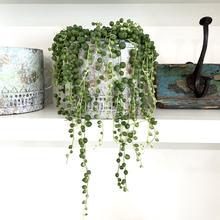 plants for home that hang like pearls