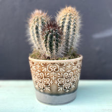Load image into Gallery viewer, Donni Cactus & Ceramic Pot