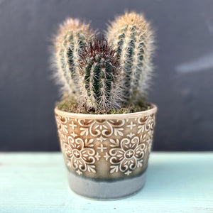 Donni Cactus & Ceramic Pot