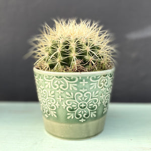 Dante Cactus & Ceramic Pot