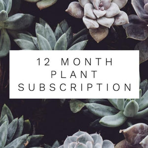 12 Month Plant Subscription