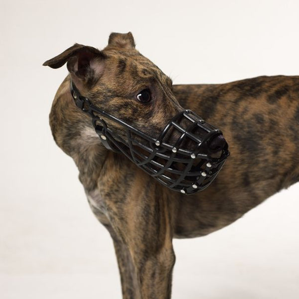 MUSERUOLA WHIPPET IN PVC