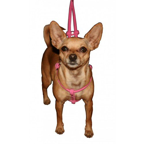 HIP DOGGIE PETTORINA CANE CHARM STEP-IN PINK MICRO SUEDE