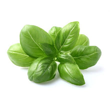 Load image into Gallery viewer, Basil - Green Sweet Italian